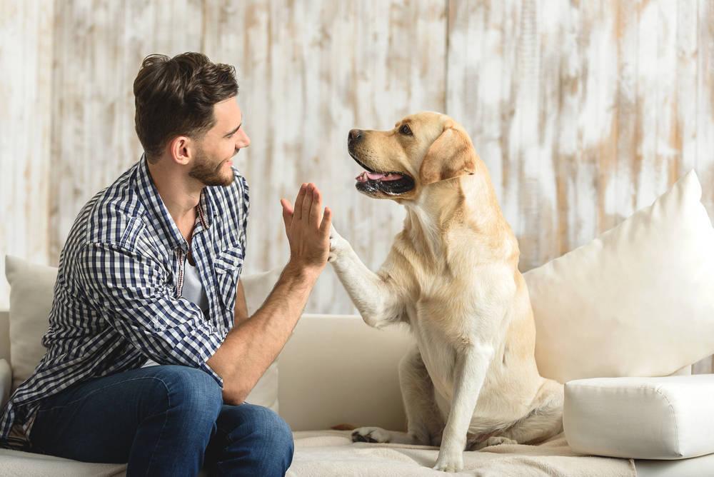 Consejos cuando traes un perro a tu hogar